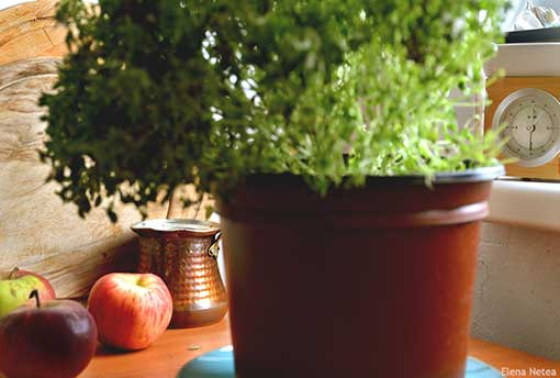 It's thyme for apples