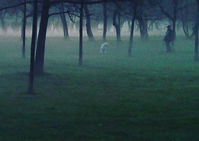 mira under mist